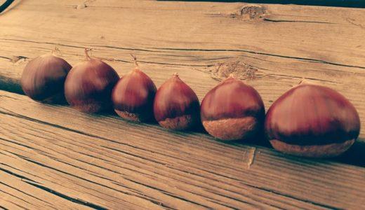 茨城での栗拾いは大和栗園!おいしい焼き栗が食べられアクセスも良好
