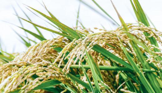 新米の期間はいつからいつまで?現役米農家がその定義を解説します