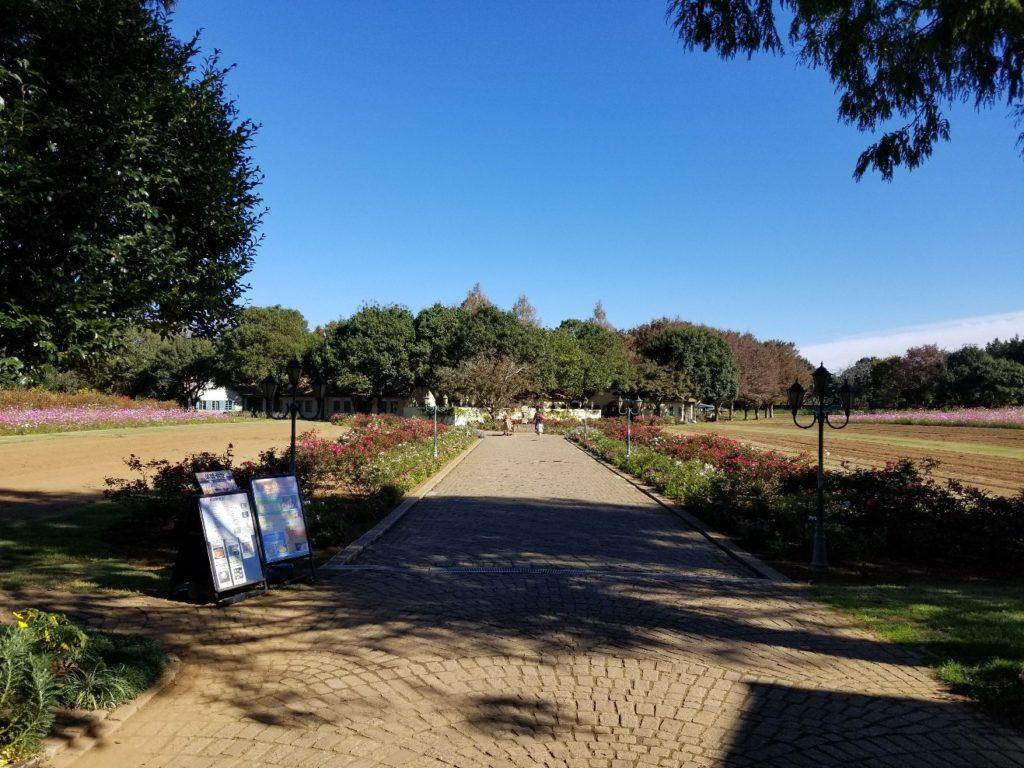 イバライド 庭